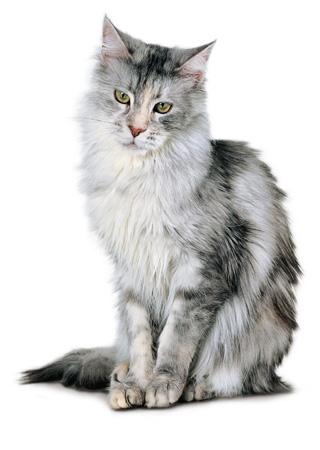 katt320